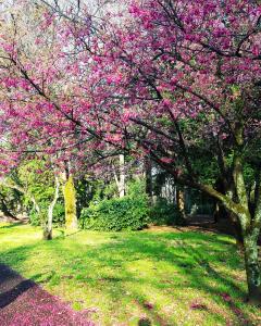 武蔵野市小金井公園付近のおすすめカフェスポット